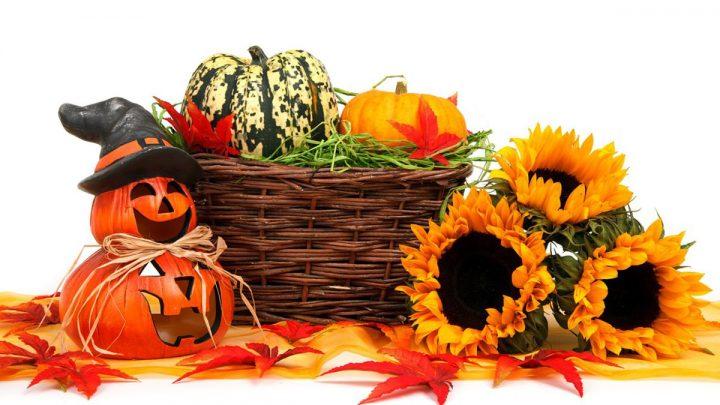 calabazas girasoles halloween