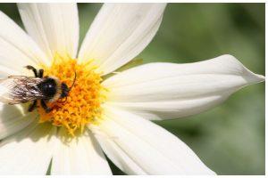 La miel y sus usos