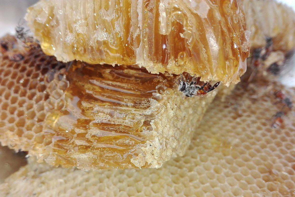 Miel, abejas, colmenas