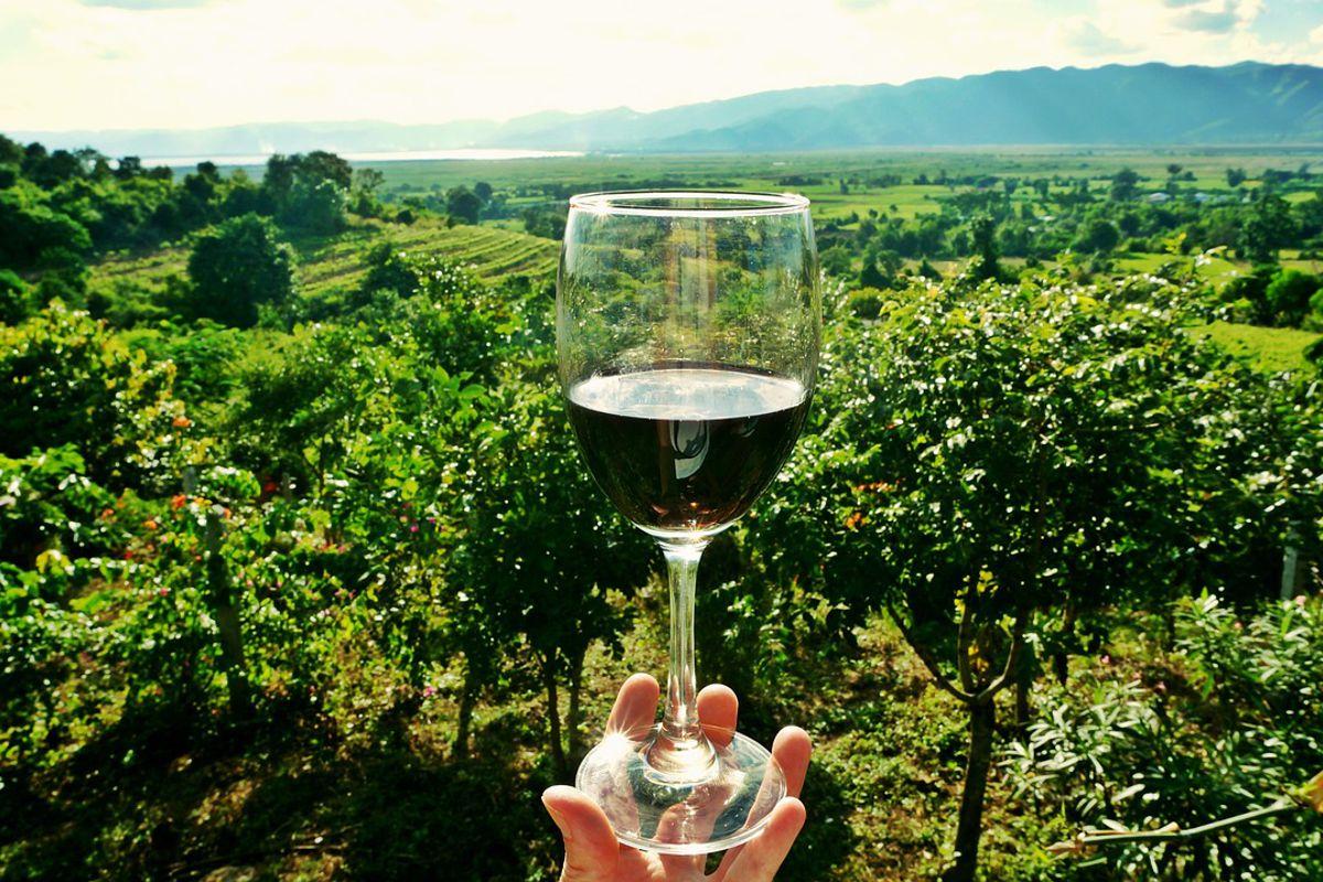 los diferentes aromas del vino