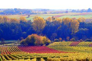 Viñedos vinos mas caros del mundo