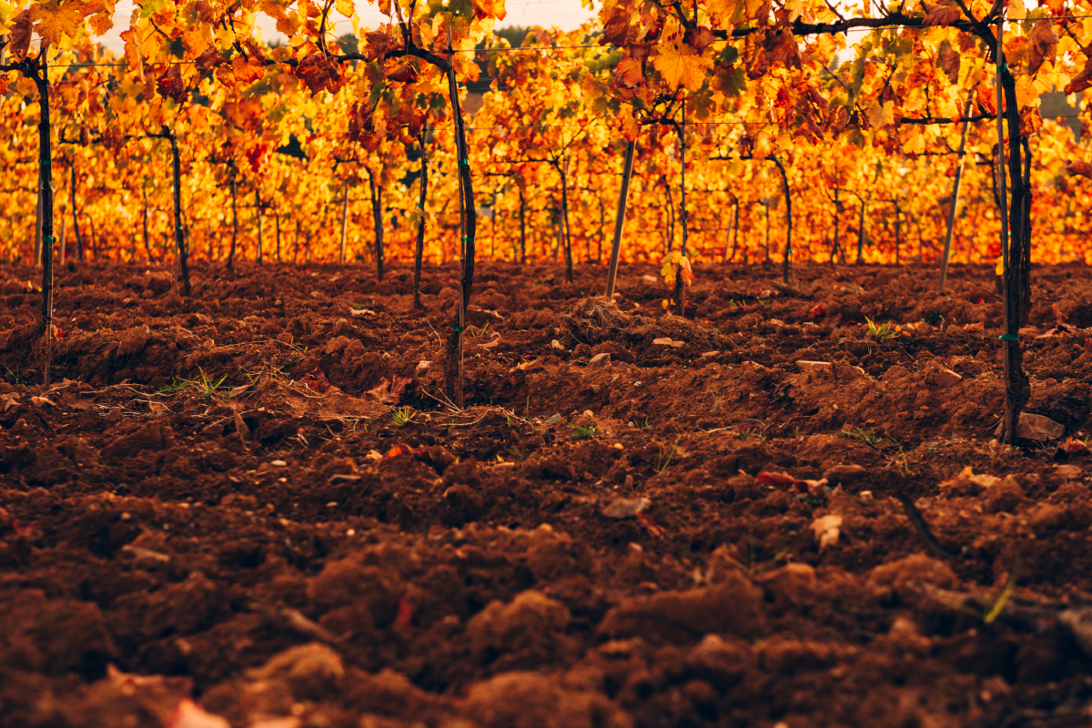 Tipos de suelo y vino