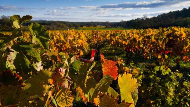 ¿Cómo puede afectar el cambio climático al vino?