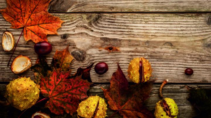 mejores productos de otoño